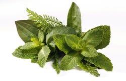 Mazzo fresco delle erbe immagine stock