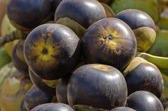 Mazzo fresco delle noci di cocco nel mercato del sud dell'India Immagini Stock