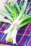 Mazzo fresco di cipolle di inverno verdi fotografia stock