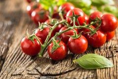 Mazzo fresco di pomodori maturi con le foglie del basilico sulla vecchia tavola di quercia immagine stock