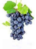 Mazzo fresco di uva con le foglie isolate su fondo bianco Fotografie Stock