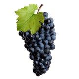 Mazzo fresco di vino rosso Fotografia Stock Libera da Diritti