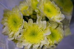 Mazzo giallo dei fiori Fotografie Stock Libere da Diritti