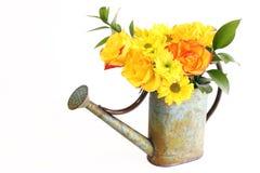 Mazzo giallo dei fiori della sorgente in latta di innaffiatura Immagine Stock Libera da Diritti