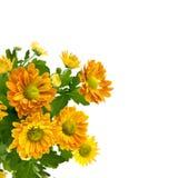 Mazzo giallo del crisantemo isolato su bianco Fotografie Stock