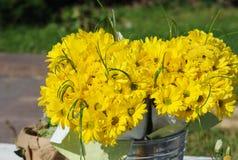 Mazzo giallo del crisantemo nel secchio di alluminio sulla via Fotografie Stock Libere da Diritti