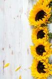 Mazzo giallo del girasole su fondo rustico bianco Fotografia Stock Libera da Diritti