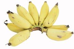 Mazzo giallo delle banane isolato su fondo bianco Fotografia Stock Libera da Diritti