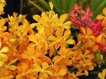 Mazzo giallo delle orchidee Fotografia Stock
