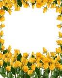 Mazzo giallo luminoso delle rose isolato su bianco Fotografie Stock