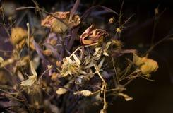 Mazzo inaridito del fiore Fotografia Stock Libera da Diritti