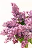 Mazzo lilla Fotografia Stock