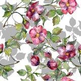 Mazzo magenta dell'acquerello dei fiori selvaggi delle rose Fiore botanico floreale Modello senza cuciture del fondo royalty illustrazione gratis
