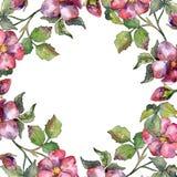 Mazzo magenta dell'acquerello dei fiori selvaggi delle rose Fiore botanico floreale Quadrato dell'ornamento del confine della pag fotografia stock