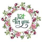 Mazzo magenta dell'acquerello dei fiori selvaggi delle rose Fiore botanico floreale Quadrato dell'ornamento del confine della pag illustrazione vettoriale
