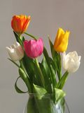 Mazzo multicolore di tulipani Immagini Stock Libere da Diritti