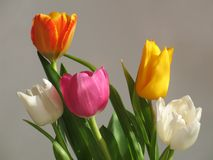 Mazzo multicolore di tulipani Fotografie Stock Libere da Diritti