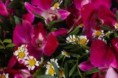 Mazzo romanzesco del fiore Immagine Stock Libera da Diritti