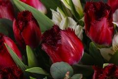 Mazzo romanzesco del fiore Fotografia Stock Libera da Diritti