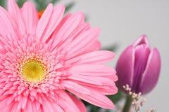Mazzo rosa Fotografia Stock Libera da Diritti