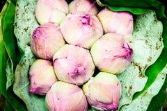 Mazzo rosa del germoglio di Lotus Fotografia Stock Libera da Diritti