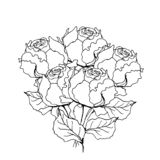 Mazzo rosa della peonia Illustrazione della fodera su bianco illustrazione di stock