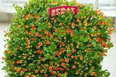 Mazzo rosa dello spruzzo arancio Immagine Stock Libera da Diritti