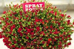 Mazzo rosa dello spruzzo rosso Immagine Stock Libera da Diritti