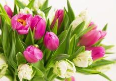 Mazzo rosso dei tulipani Fotografie Stock