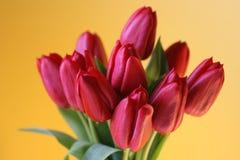 Mazzo rosso del tulipano su colore giallo Immagini Stock