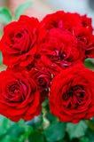 Mazzo rosso delle rose Fotografia Stock
