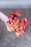 Mazzo rosso delle rose di fioritura in mano dell'uomo Fotografia Stock Libera da Diritti