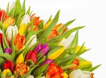 Mazzo variopinto dei fiori freschi del tulipano della sorgente Fotografie Stock