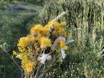 Mazzo variopinto dei fiori selvaggi sul fondo del campo fotografia stock libera da diritti