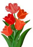 Mazzo variopinto dei tulipani Fotografia Stock Libera da Diritti