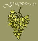 Mazzo verde dell'uva Fotografia Stock