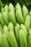 Mazzo verde della banana Fotografia Stock