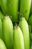 Mazzo verde della banana Immagini Stock