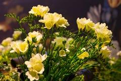Mazzo vibrante del fiore del fondo giallo di alstroemeria Fotografia Stock Libera da Diritti