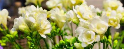 Mazzo vibrante del fiore del fondo giallo di alstroemeria Fotografie Stock Libere da Diritti