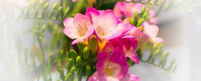 Mazzo vibrante del fiore di alstroemeria rosa Fotografia Stock