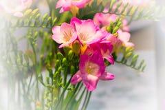 Mazzo vibrante del fiore di alstroemeria rosa Immagini Stock
