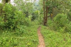 Mbeliling热带森林,东部努沙登加拉群岛 库存图片