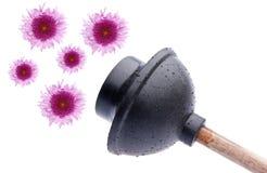 Émbolo mojado con las flores Fotos de archivo libres de regalías