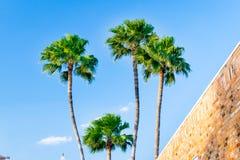 McAllen, Texas. Palm treea at McAllen, Texas in the Rio Grande Valley.n stock photography