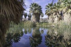 McCallum gaju staw w Coachella Dolinnej prezerwie zdjęcia stock