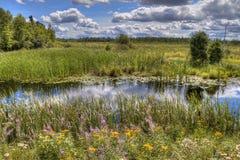 McCarthy stranddelstatspark i nordliga Minnesota arkivbilder