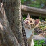 McCavity, апельсин и котенок белизны, сфокусировало на деятельности при фидера птицы вне рамки фото Стоковое Изображение