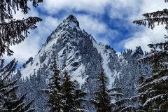McClellan Butte Snow Mountain Peak Through Trees Snoqualme Pass Stock Photo