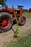 McCormick Deering W-30 tractor and a stalk of corn. DALTON, MINNESOTA, Sept 8, 2017: A restored red W-30 McCormick Deering tractor passes by a misplaced mature Stock Images